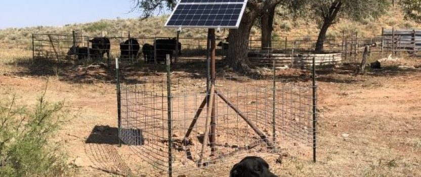New Mexico Happy Cattle & Happy Dogs!